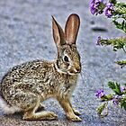 Baby Bunny by Tammy  (Robison)Espino