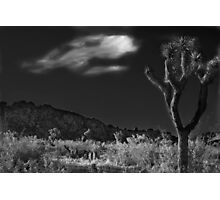 The Desert Knows Photographic Print
