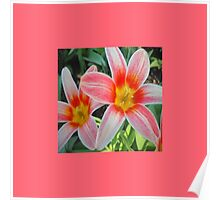 Tulips  Spring Poster