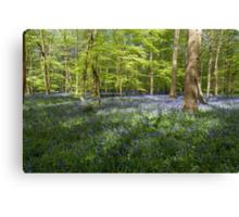 Bluebells Coxsetter's wood   Canvas Print