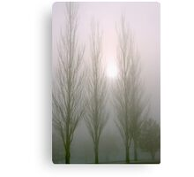 Winter Poplars in Fog 2 Canvas Print