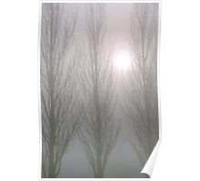 Winter Poplars in Fog 3 Poster