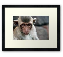 Funky Crab-Eating Macaque Framed Print