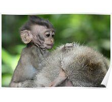 Adorable Crab-Eating Macaque