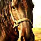 Portraits Of A Brown Horse by terrebo