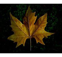 Autumn's Casualty Photographic Print