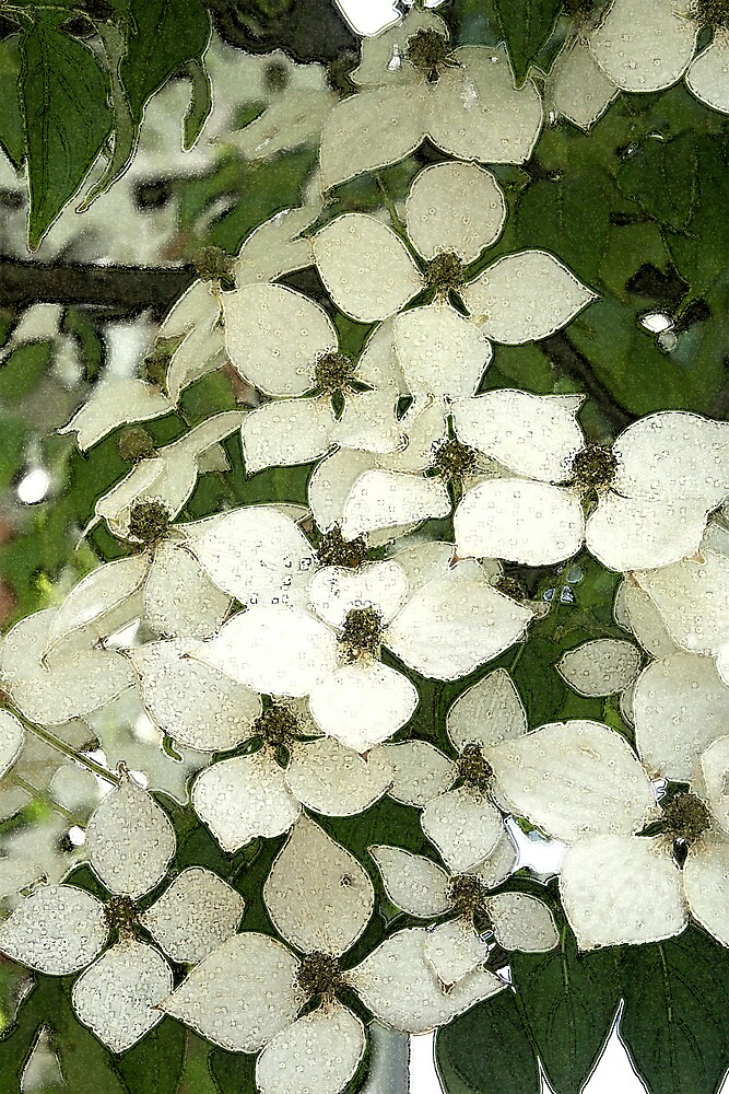 Dogwood Flowers by Karen Kaleta