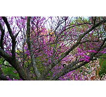Trees in bloom Photographic Print