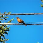 Bird on the Wire by Nora Caswell
