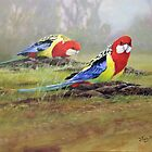 Eastern Rosellas by eric shepherd