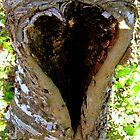 Love of Nature by Sophia Flot-Warner