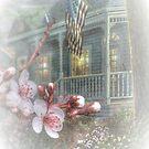 Celebrating Springtime by wiscbackroadz