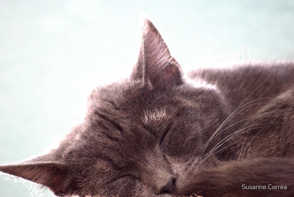 Sleeping Kitty by Susanne Correa