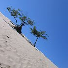 Dunes Askew by IntriCate
