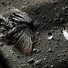 1.5.2015: Dead Bird I by Petri Volanen