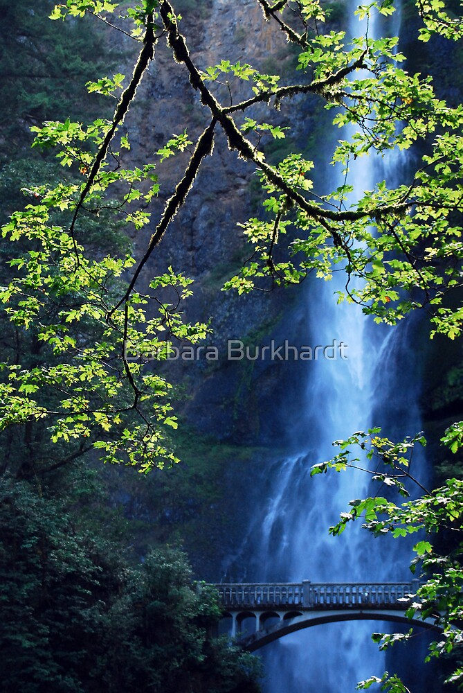 Focal Point - Multnomah Falls - Oregon by Barbara Burkhardt
