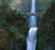 Light Infusion - Multnomah Falls Oregon by Barbara Burkhardt