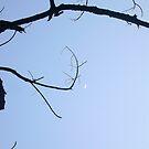 Branch by Digby