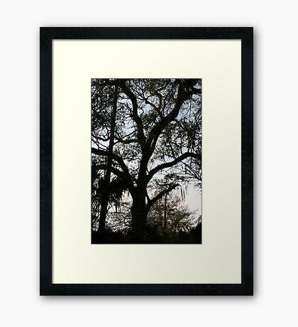 Standing Proud Framed Print