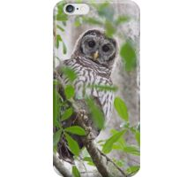 Little Barred Owl in the woods iPhone Case/Skin