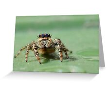 Jumping Spider 2 Greeting Card
