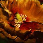 Silken Poppy by suzannem73