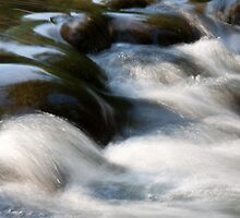 Reflections in the stream by Robert Kelch, M.D.