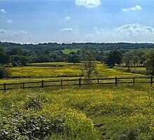 Middle England by Steve plowman