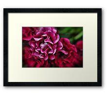 Fuchsia Flowers Framed Print
