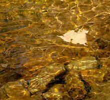 Floating Along ........ ^ by ctheworld