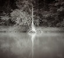 The Swamp by Zohar Lindenbaum