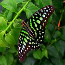 Butterfly in green by ienemien