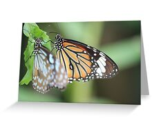 Blue Tiger and Monarch Greeting Card