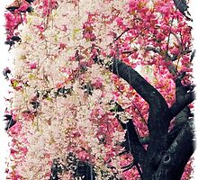 Asian Cherry Vignette by Jessica Jenney