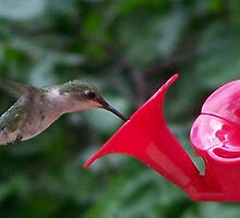 Mr. Hummingbird. by tserio