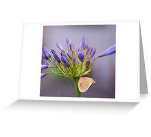 Lavender Dreams: Greeting Card