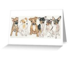 Rat Terrier Puppies Greeting Card