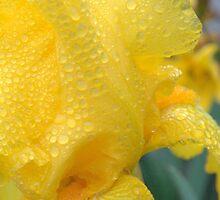 I've got sunshine... by LindaR