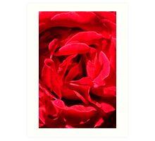 Rose Close up Art Print