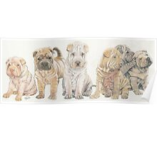 Shar Pei Puppies Poster