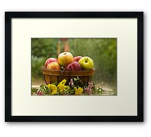 Apples in the Rain Framed Print