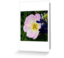 Pink Primrose Greeting Card
