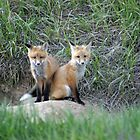 Siblings by Donna Ridgway