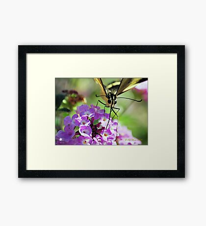 Looking at You Babe Framed Print