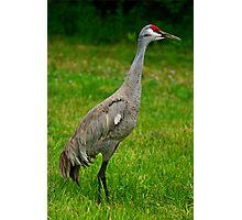 Crane Lookout Photographic Print