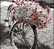 Vintage Recycled Bicycle on Lawn Red Geranium Flower Planter Black and White and Isolated Color Fine Art Photograph by jocelynsart