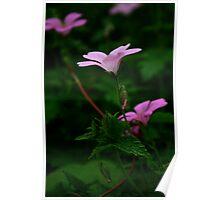 Pink geraniums 2 Poster