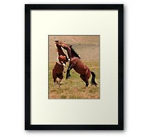 The Stallion Way Framed Print