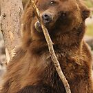 Grizzly Bear Cute by William C. Gladish, World Design