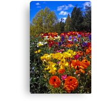 Spring Colour, Hobart Style Canvas Print